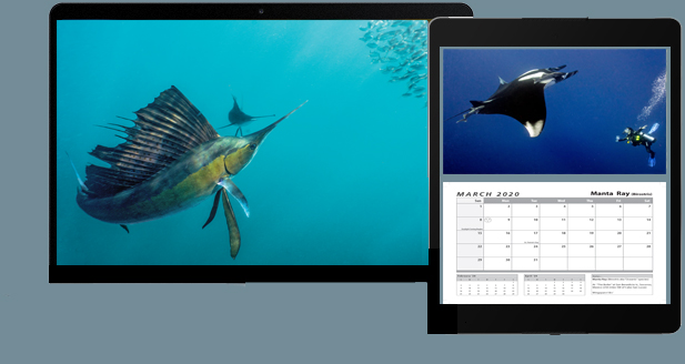 Tropical Fish Calendar Products
