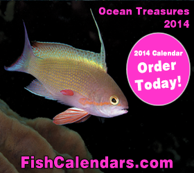 2014 Fish Calendar - Scalefin Anthias - Cover 2014