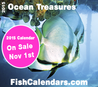 Tropical Fish 2015 Wall Calendar